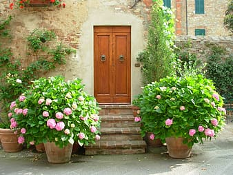 Brown wooden door beside plants with flowers during daytime