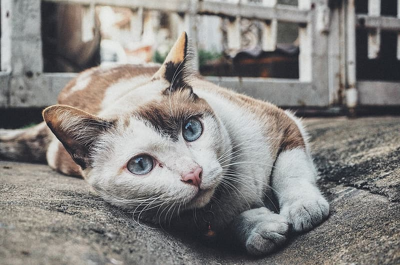 Shallow focus photography of short-coated white and brown cat
