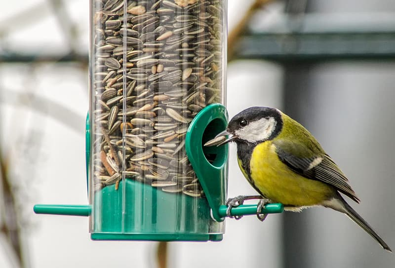 Yellow and black bird on green bird feeder