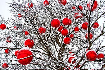 Red round ornament on brown tree branch