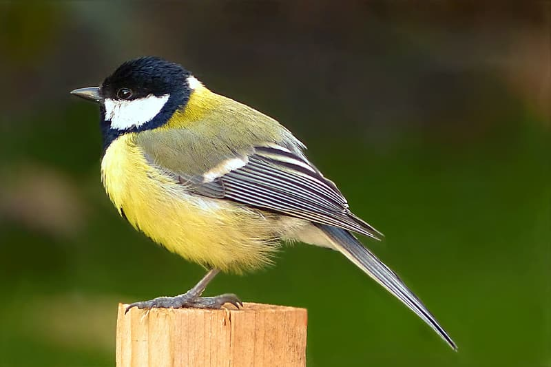 Shallow focus photography of yellow and black bird