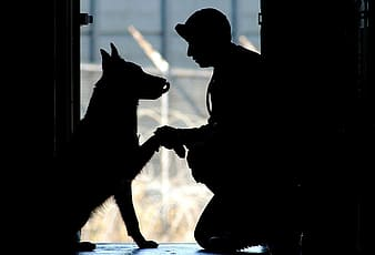 Silhouette photography of man and dog sitting near door