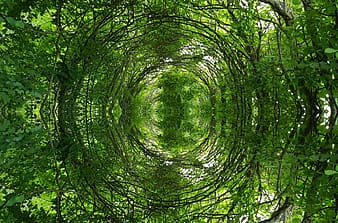 Green trees in low angle photography