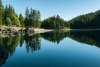 Calm lake surrounded by trees