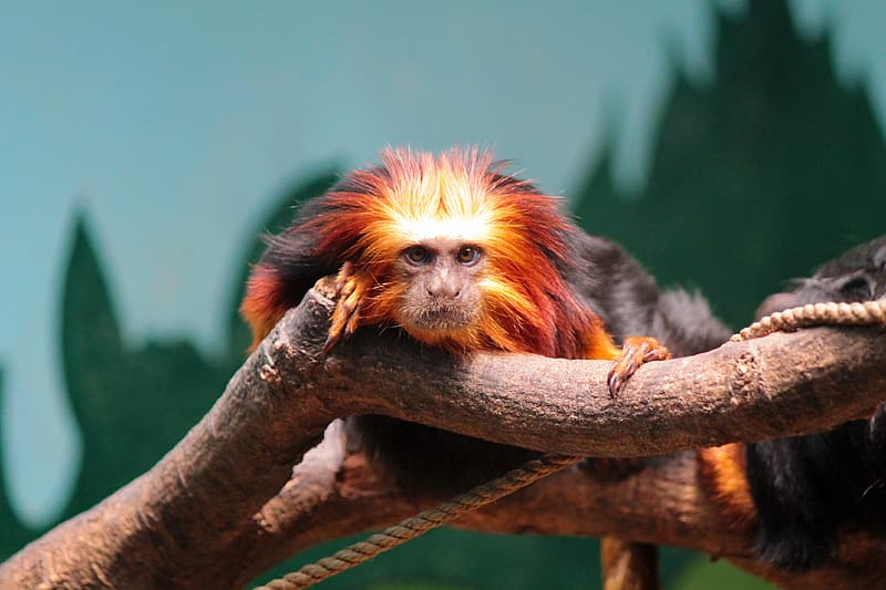 Brown and black monkey on tree branch