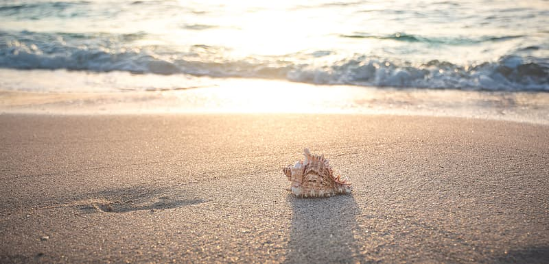 Brown sea shell on brown sand during daytime