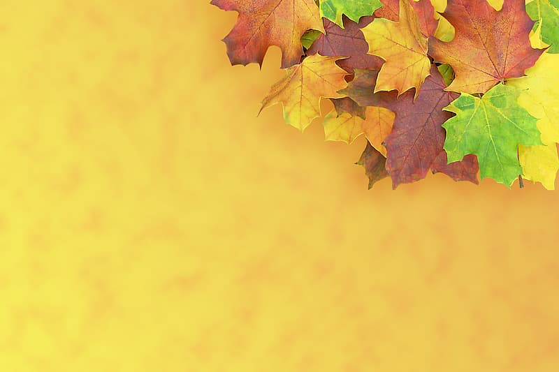 Green, brown, and yellow maple leaves