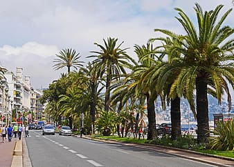 Green palm trees beside road during daytime
