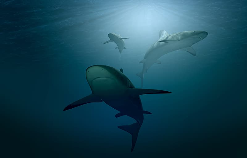 Sharks under body of water