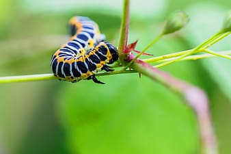 Micro photography of black and yellow caterpillar perching on stem
