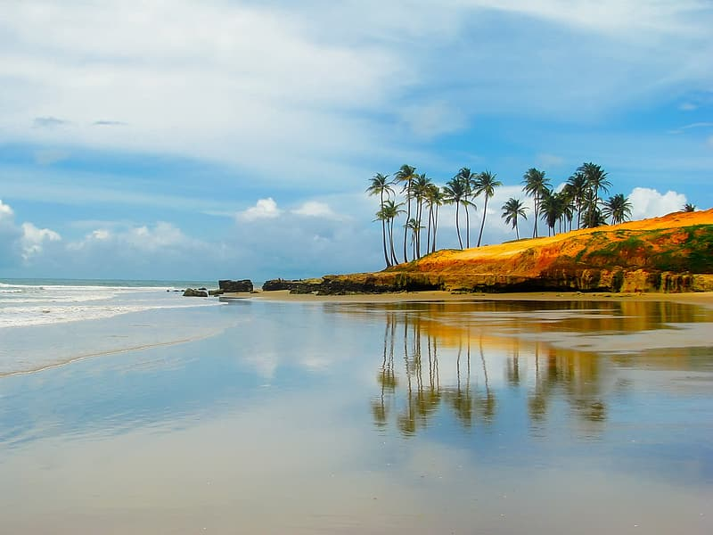 Beach shore with tropical trees under cloudy sky during daytime