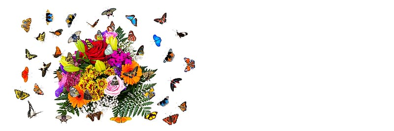 Blue butterflies on white background