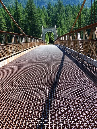 Gray and brown concrete bridge near forest