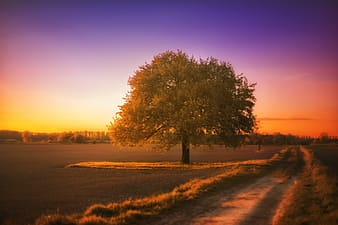 Green tree at golden hour