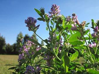 Purple flower with green leaves during daytime