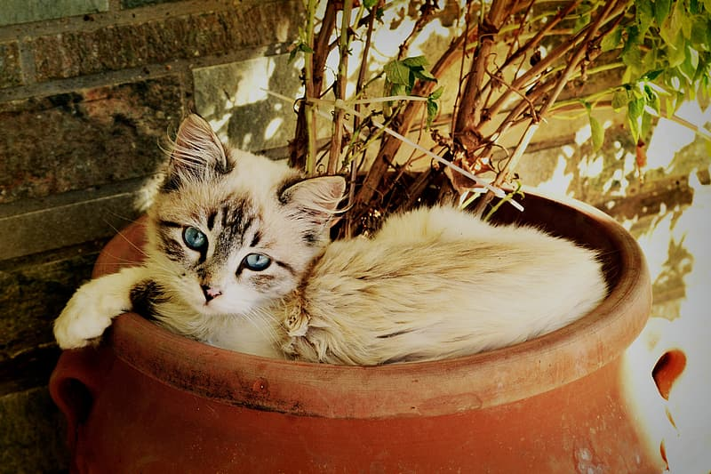 Short-coated white and black cat on brown pot