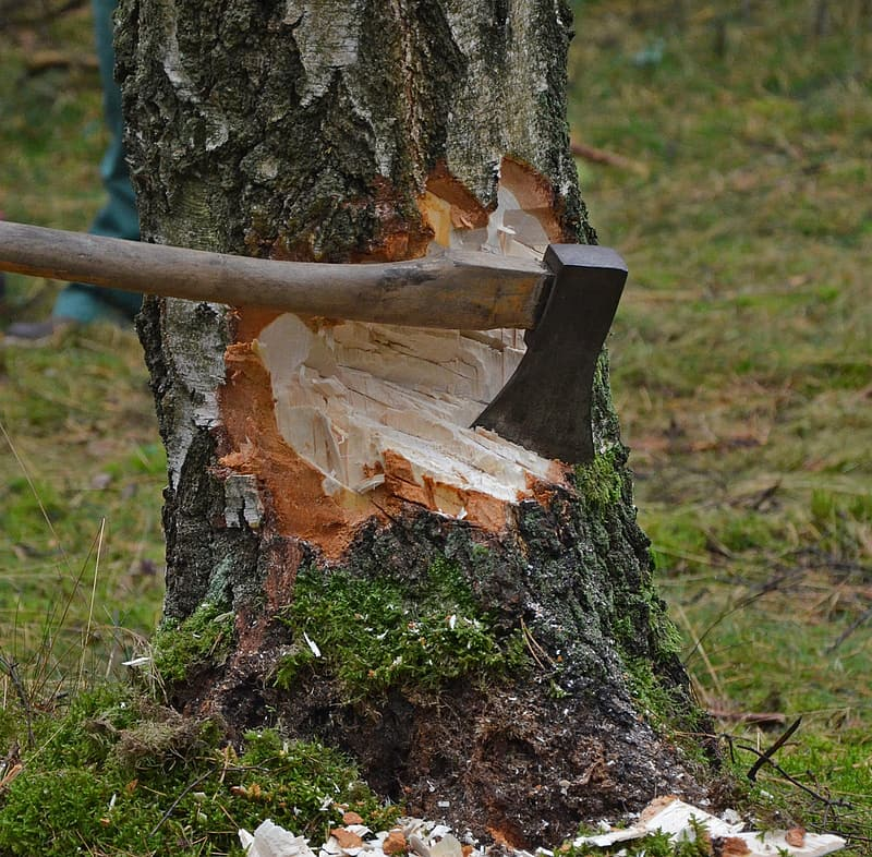 Brown axe on tree trunk
