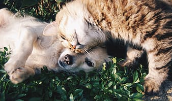 Cat and puppy on grass field
