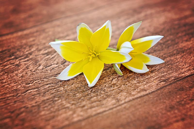Yellow and white petaled flowers