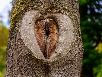 Brown tree trunk with hole