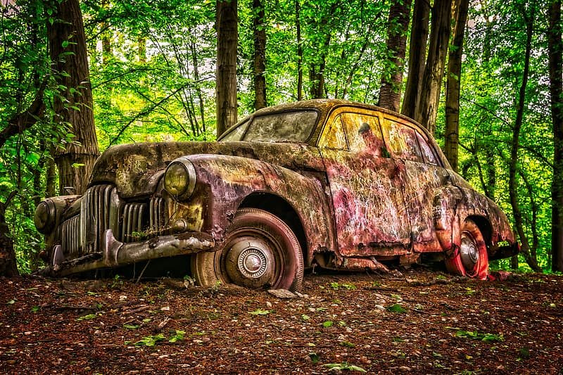 Abandoned classic sedan at forest during daytime