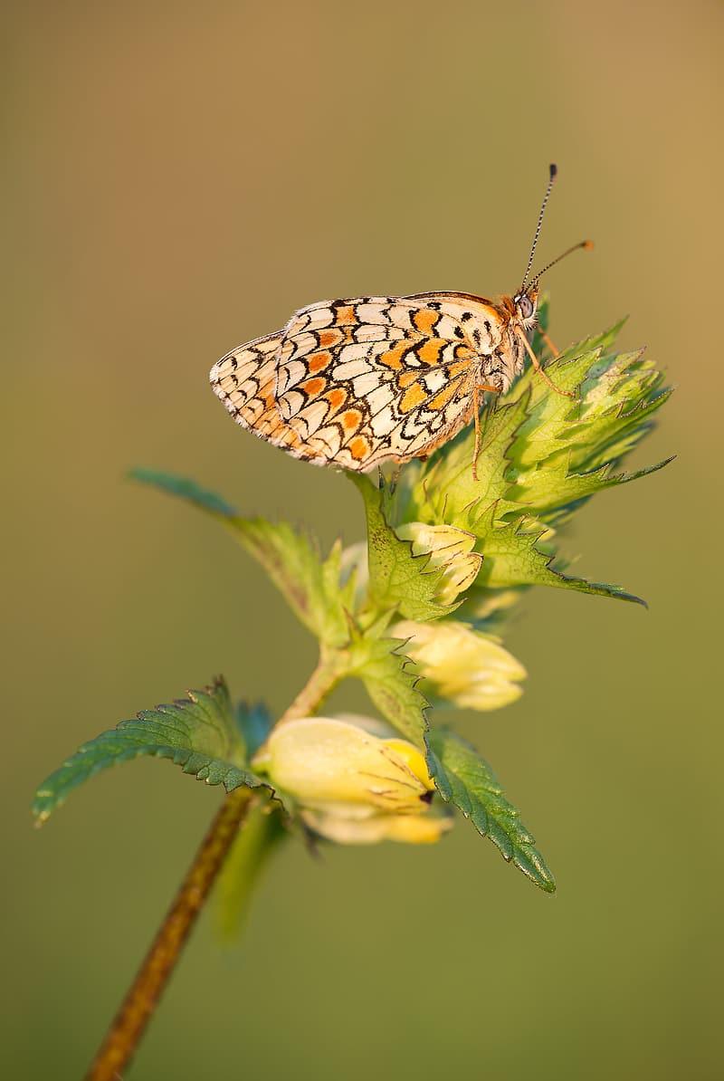 Selective focus photography of butterfly on green leaf plant