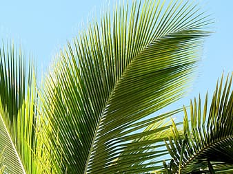 Palm tree during daytime