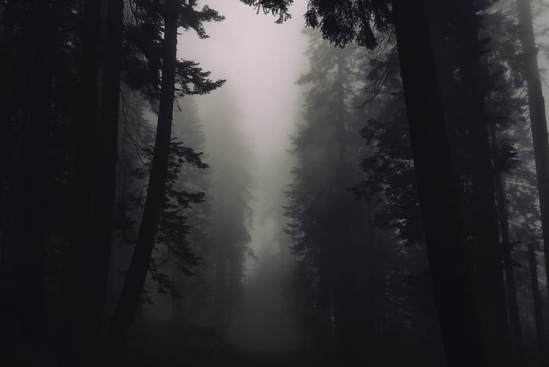 Green trees with fog during daytime