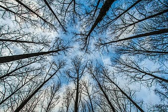 Worm's-eye view of bare trees across clouds