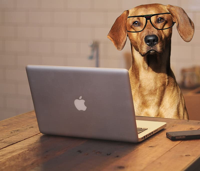 Brown coated dog in front of MacBook Pro