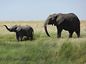 Elephant and baby elephant at grass field during daytime