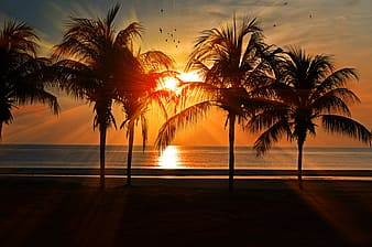 Silhouette of trees near beach during sunset