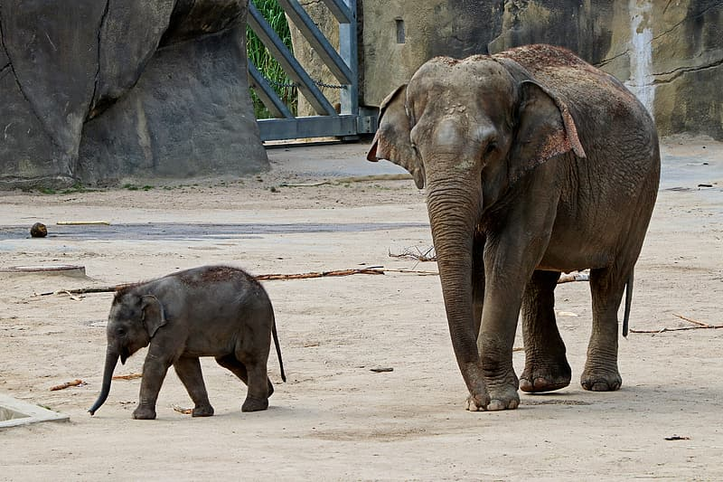 Adult and baby elephant walking on gray pavement