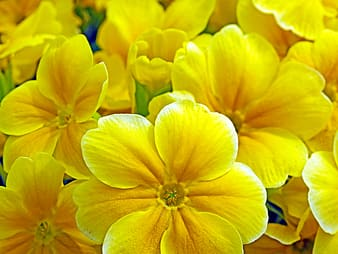 Yellow petaled flowers