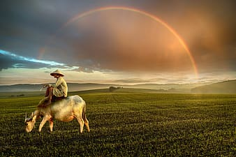 Person riding horse on green grass field during daytime