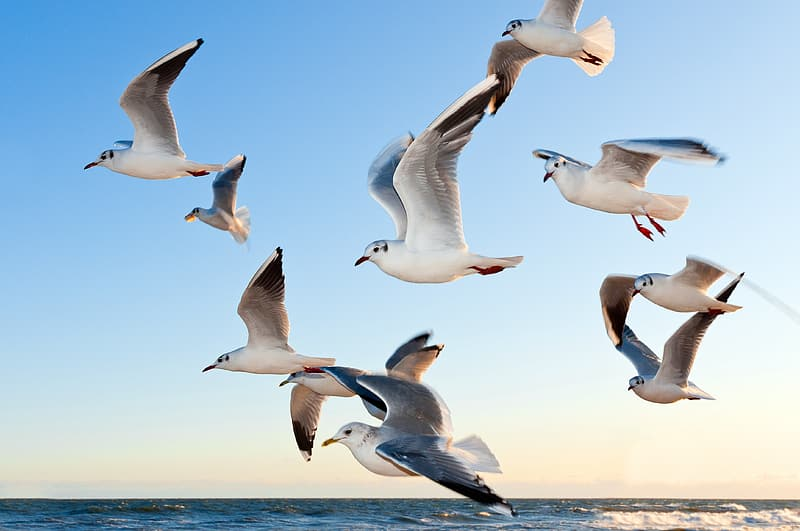 Flock of white seagull flying over body of water
