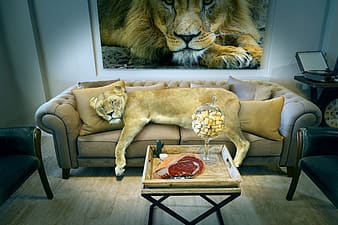 Lion and lioness on brown wooden table