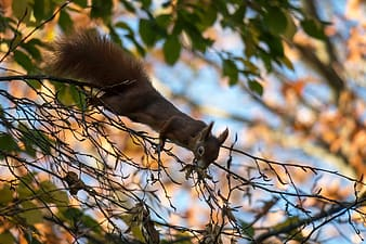 squirrel, eat, climb, cute, rodent, possierlich, sweet, cheeky, mammal, creature
