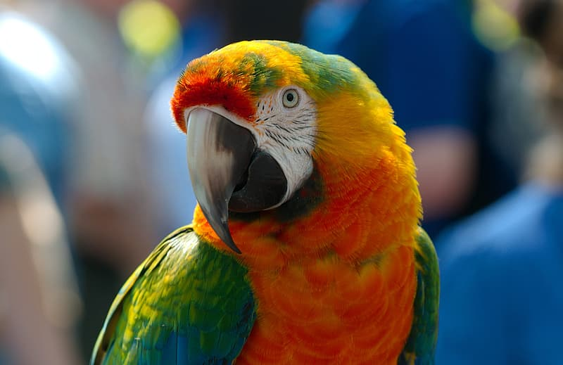 Selective focus photography of red and green parrot