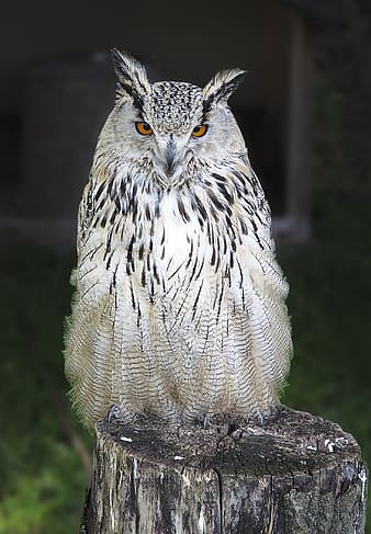 White and black owl standing on wooden tree log