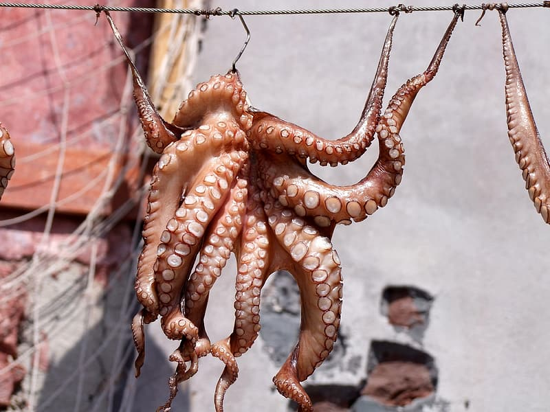 Brown octopus hanged on cable