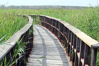 Brown wooden bridge in the middle of green grass field