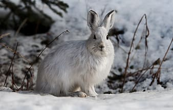 White rabbit on snow covered ground during daytime