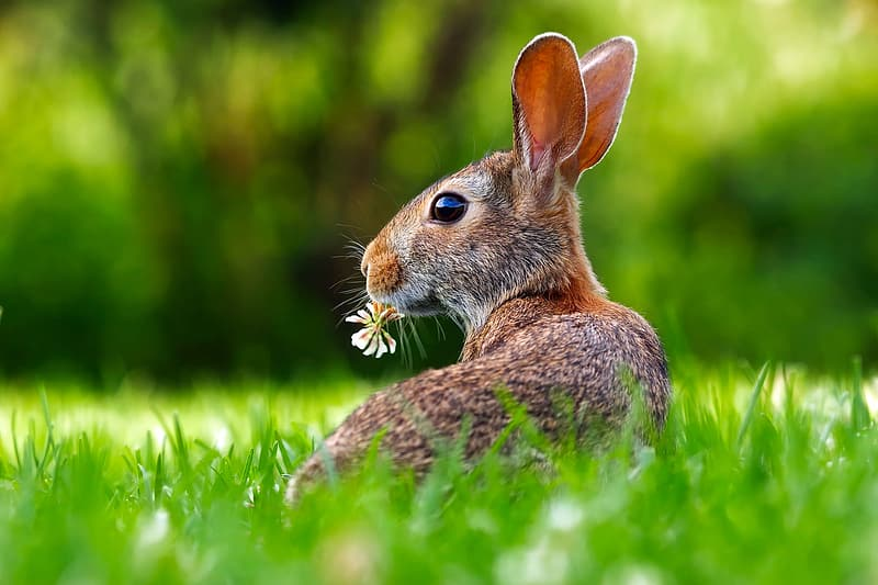 Brown rabbit on grass field on focus photo