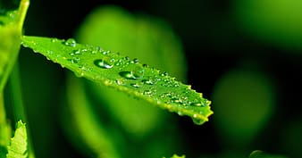 Water dew on green leaf plant in self-focus photography