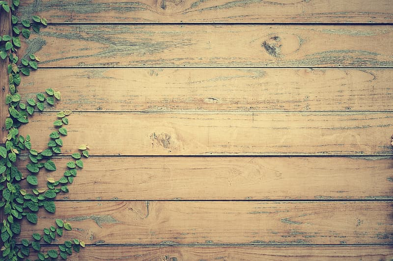 Green leaf plant and brown wooden wall