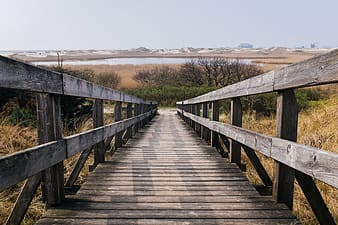 Empty wooden bridge beside green leaf trees