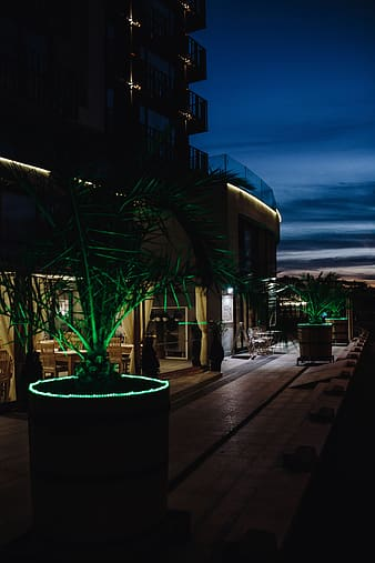 Illuminated palm trees