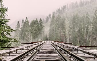 Black metal train trail in the middle of green trees