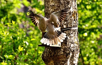 Photography of gray bird on tree trunk